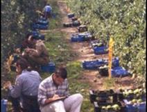 Campus agroalimentari