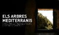 Els arbres mediterranis, un recorregut pels seus valors culturals i espirituals