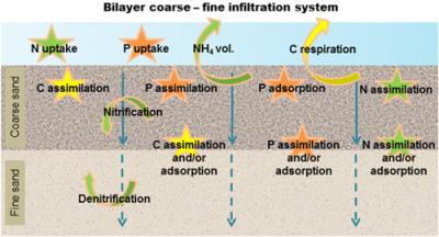 Bilayer Infiltration System