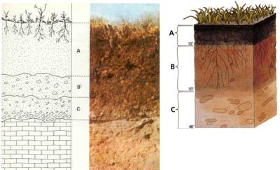 perfil sòl