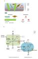 Arsenic Biogeochemistry