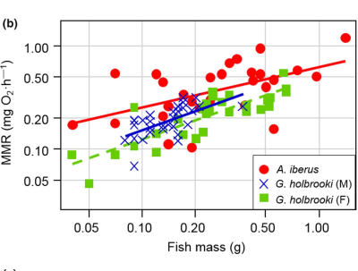 Relationships of critical swimming speed Ucrit (a), maximal metabolic rate MMR (b) and absolute aerobic scope AAS (c) with fish mass for Spanish toothcarp, Aphanius iberus (N = 28) and mosquitofish, Gambusia holbrooki (N = 60).