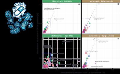 """Una tesi doctoral realitzada al grup de """"Qualitat i Diversitat Microbiana"""" de l'ICRA ha estudiat l'impacte de la contaminació antropogènica en la distribució, abundància i disseminació de la resistència a antibiòtic en sistemes aquàtics."""