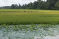 Cambotja rural