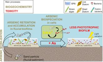 arsenic biofilm
