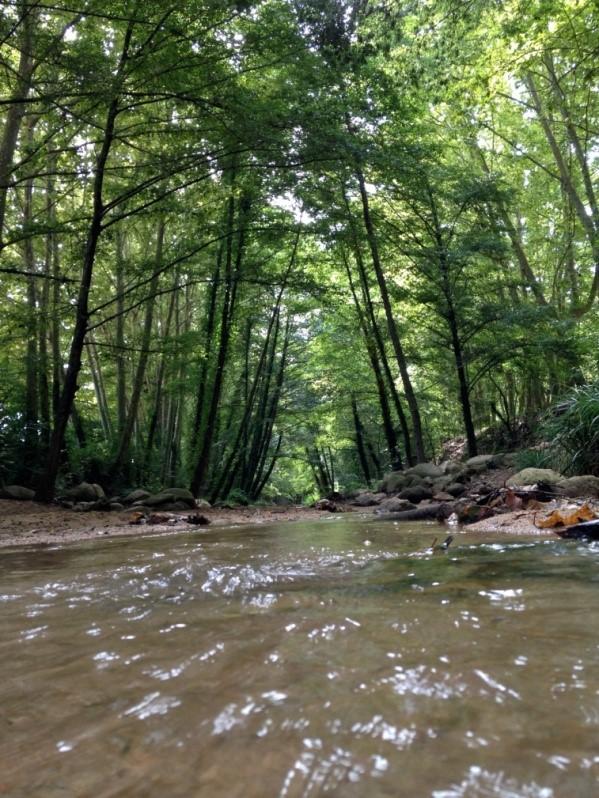 Beques Càtedra de l'Aigua per estudiants de Batxillerat que realitzin treballs de recerca relacionats amb el Patrimoni Natural i Cultural de les Guilleries